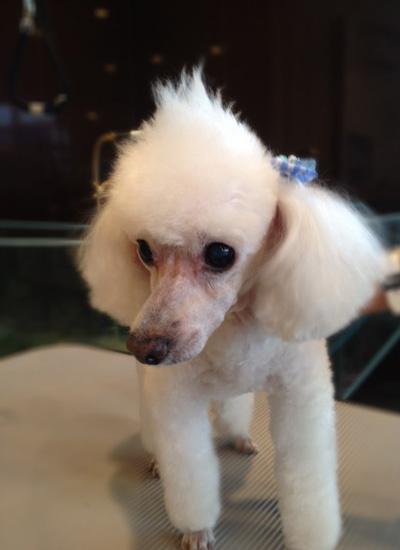 <p>顔ソリをする事でより、モヒカンを目立たせてます。サイドの毛をスッキリ取り角度を付けたハードスタイル</p> <p>¥6,000</p>